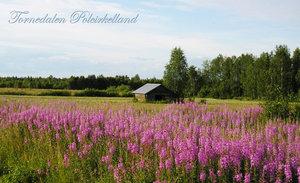 Tornedalen Jänkisjärvi