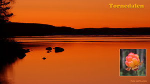 Hjortron - Solnedgång