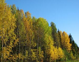 Skog i höstskrud