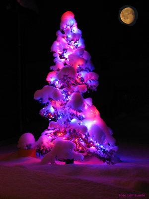 Julbild Tornedalen