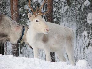 Tornedalen Kivijärvi